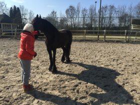 sessie paardencoaching in Waardenburg